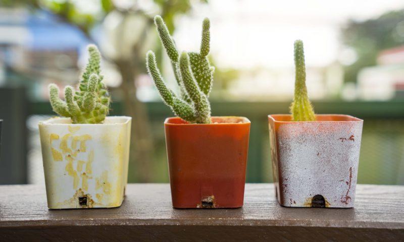 cactus, pots, plants, home decor, house